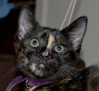 Perfect Paws Adoption Cat Rescue